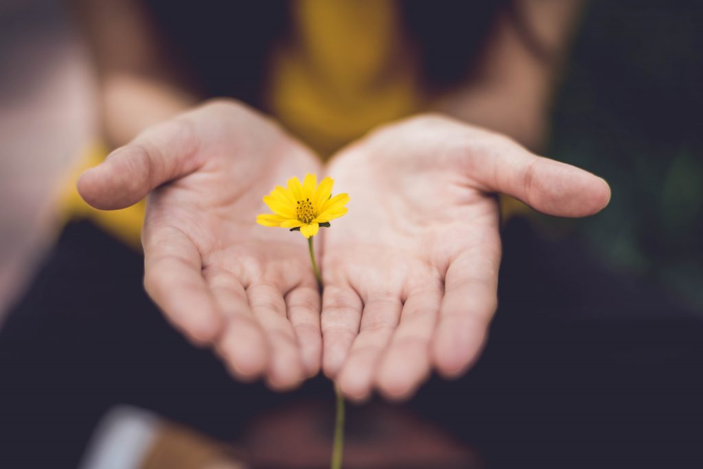 Small yellow flower in hands